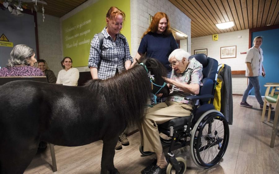 Konie pomagają pensjonariuszom domu spokojnej starości w Deveter w Holandii