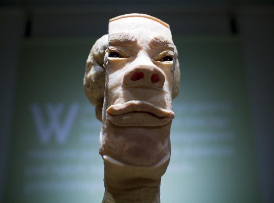 Wystawa obdartych ze skóry zwłok w Polsce