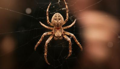 Czy pajęcze nici zawojują świat mody?
