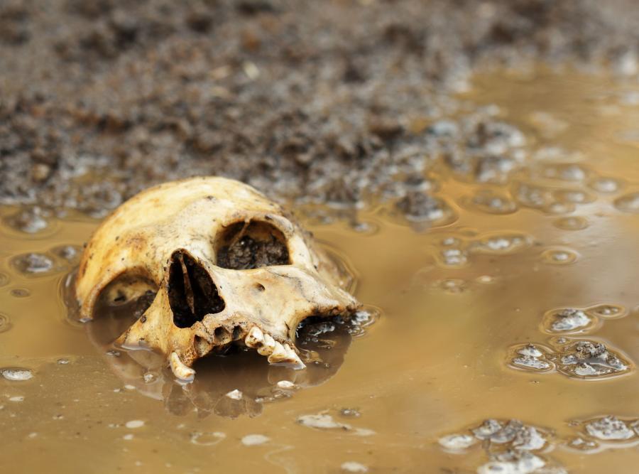 Ludzka czaszka w błocie (zdjęcie ilustracyjne)