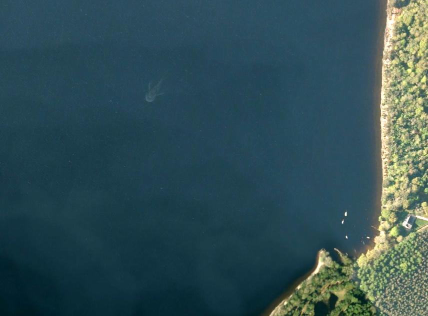 Potwór z Loch Ness sfotografowany przez satelitę? (fot. Apple Maps)
