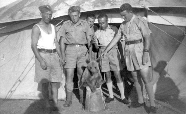 Kapral Wojtek, co lubił piwo. Historia niedźwiedzia w armii Andersa. ZDJĘCIA i WIDEO