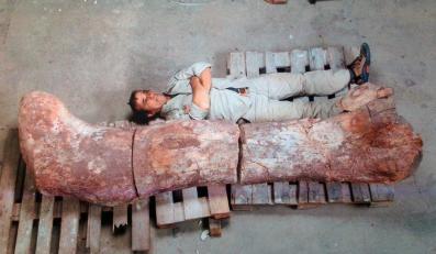 Największy dinozaur świata - tytanozaur - odkryty w Argentynie