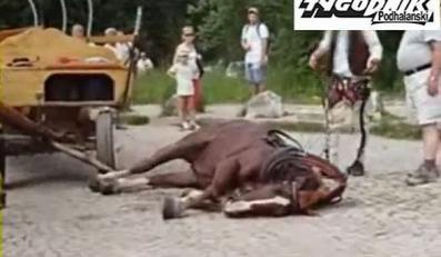 Co zabiło konia nad Morskim Okiem?
