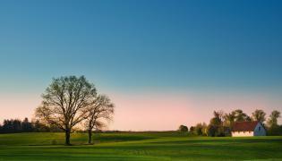 Dom, pole i drzewa